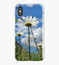Oxeye Daisies Wildflowers - Leucanthemum vulgare iPhone Case/Skin
