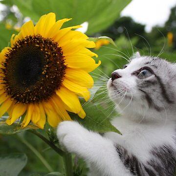 Sunflower cat by NYANKICHILABO