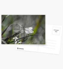 Dragonfly silver metal Postcards