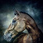 Stallion by Tarrby