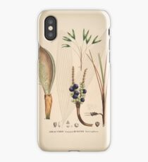 Historia naturalis palmarum, opus tripartitum (Natural History of Palms in 3 volumes) iPhone Case