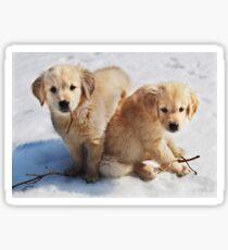 Golden Retriever Puppies First Winter #3 Sticker