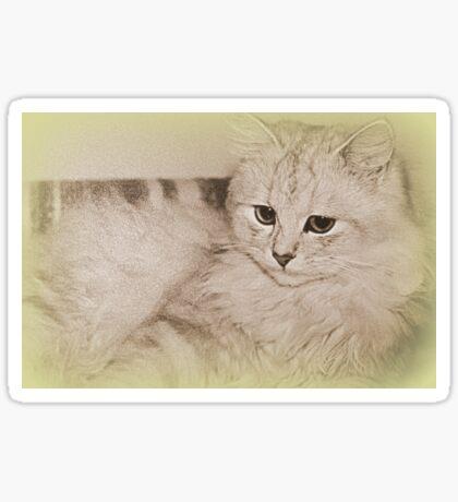 Erinnerungen an meine Kitty Sticker