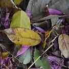 Leaves  by CarolM