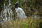 Wood Stork at Viera Wetlands by ValeriesGallery