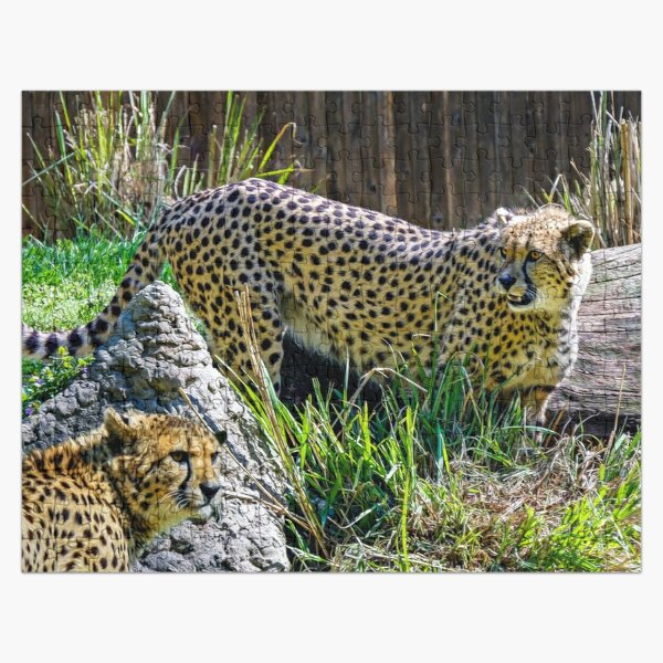 Cheetah looking Cute Jigsaw Puzzle