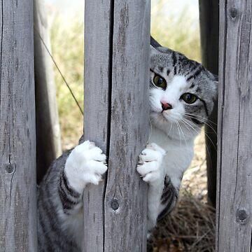 Cat in hiding by NYANKICHILABO