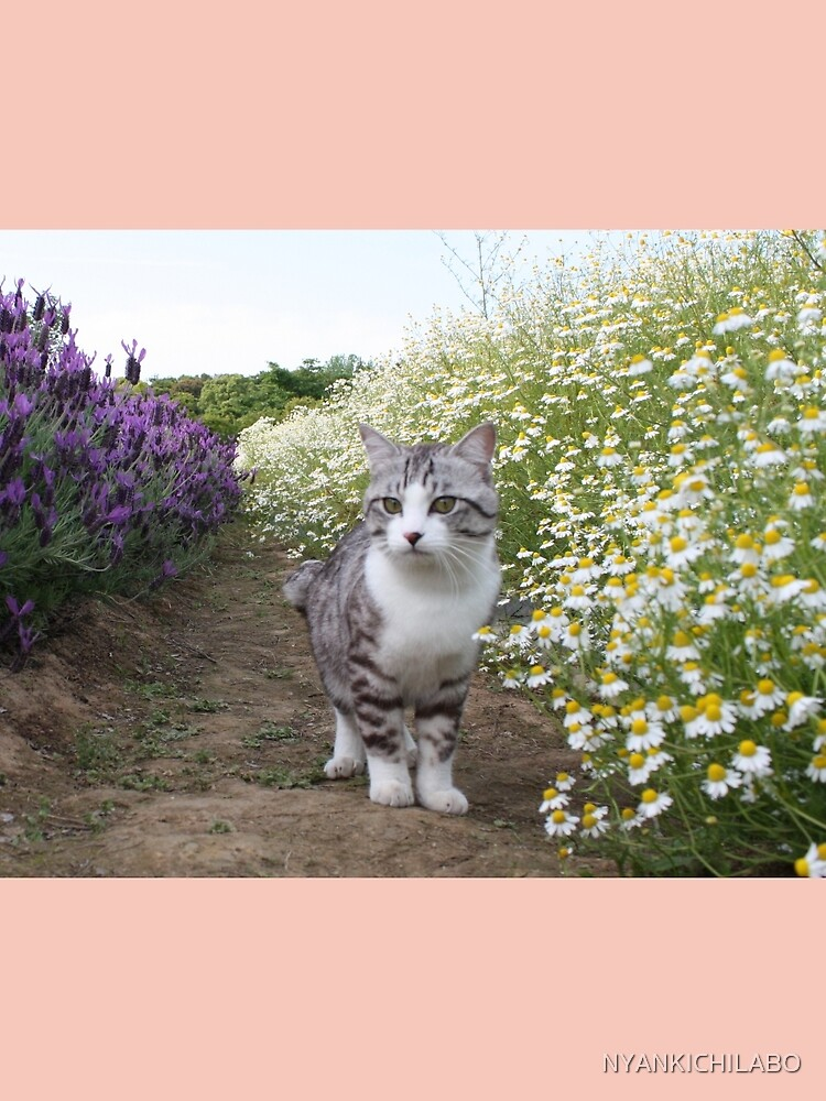 Flowers and cat by NYANKICHILABO