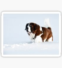 St. Bernard in the snow Sticker