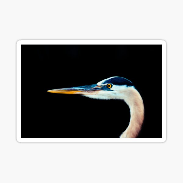 Bird Beak Feather Animal Fly Eyes  Sticker