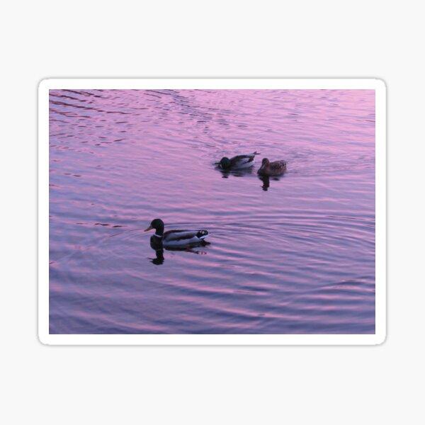 Lakeside Sunset Sticker