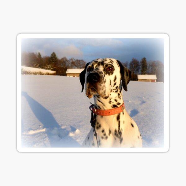 Julius in the winter sun Sticker