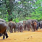 Jumbo traffic ahead (please see description) by Kanages Ramesh