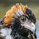 Eagle eyes by Kathryn Potempski