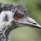 Emu Profile  by Kathryn Potempski