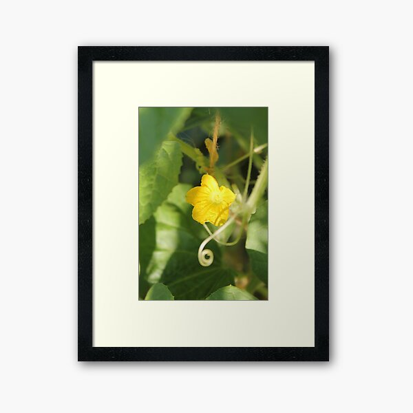 Yellow unnamed flower on a background of green leaves Framed Art Print