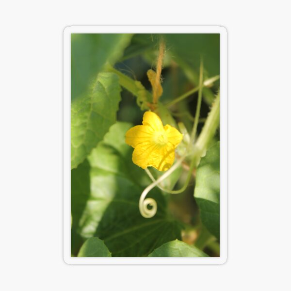 Yellow unnamed flower on a background of green leaves Transparent Sticker