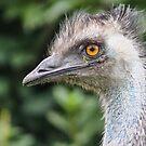 Emu smiling by Kathryn Potempski