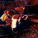 Schafe - stehen von der Masse ab von Marlene Watson