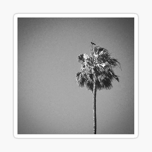 Palm Tree with Raven Sticker
