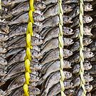 Dried Fish by Bo Insogna