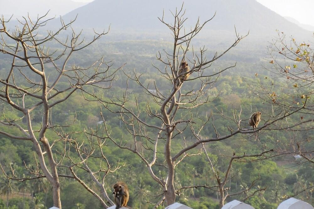 Monkeys In Sri Lanka by discoverolive