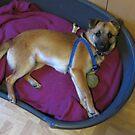 Floortje, my new little dog by ienemien