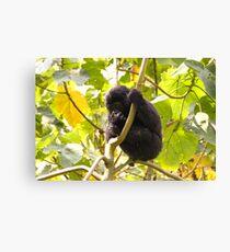 Gorilla Baby, Uganda Africa Canvas Print