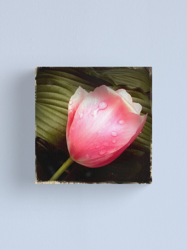 Alternate view of Pink Tulip Canvas Print