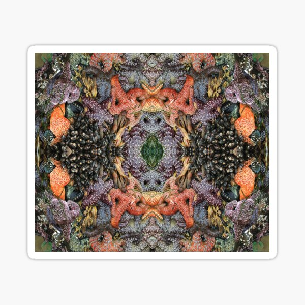 Psychedelic Sealife and Starfish Spectacular Sticker