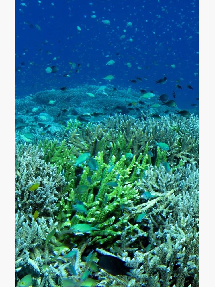 Reef Flat at Saru Namu-Namu Island. by neoniphon