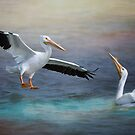 American White Pelicans by Bonnie T.  Barry