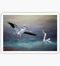 American White Pelicans Sticker