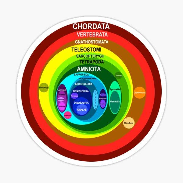Chordata Sticker