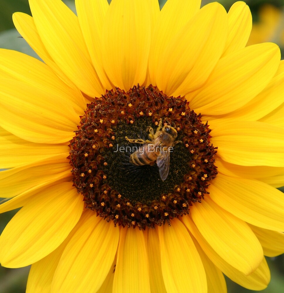 Bee Centred by Jenny Brice