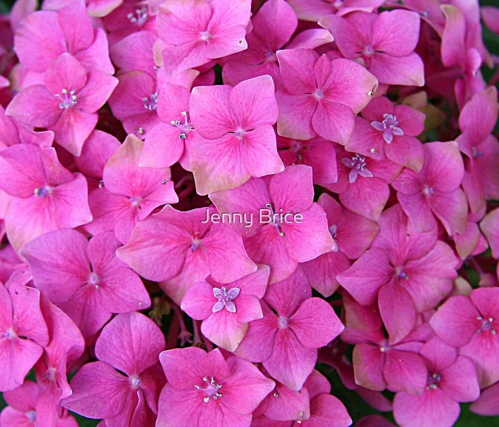 Hydrangea Flower by Jenny Brice