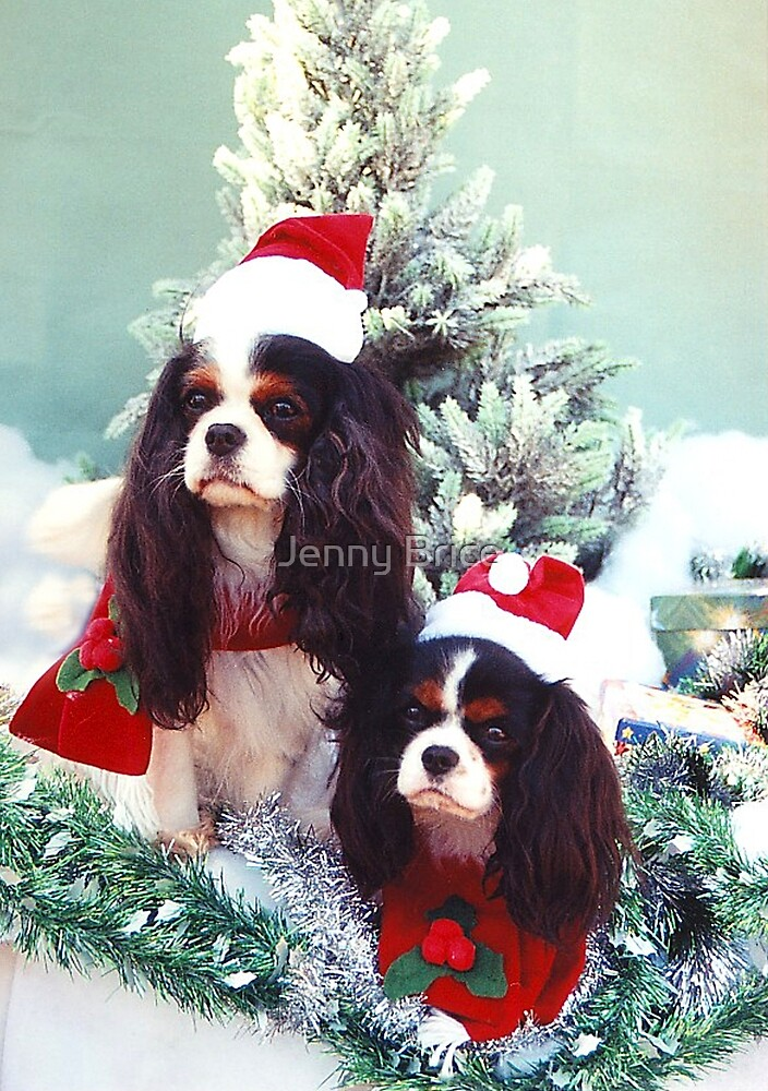 Cavaliers at Christmas by Jenny Brice
