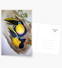 John Gould's Monograph of the Ramphastidae, or Family of Toucans, published Postcards