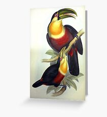 John Gould's Monograph of the Ramphastidae, or Family of Toucans, published i Greeting Card
