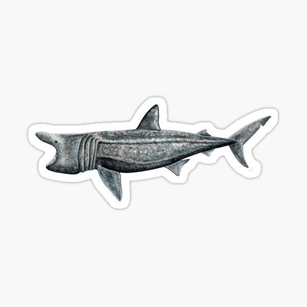 Riesenhai (Cetorhinus maximus) Sticker
