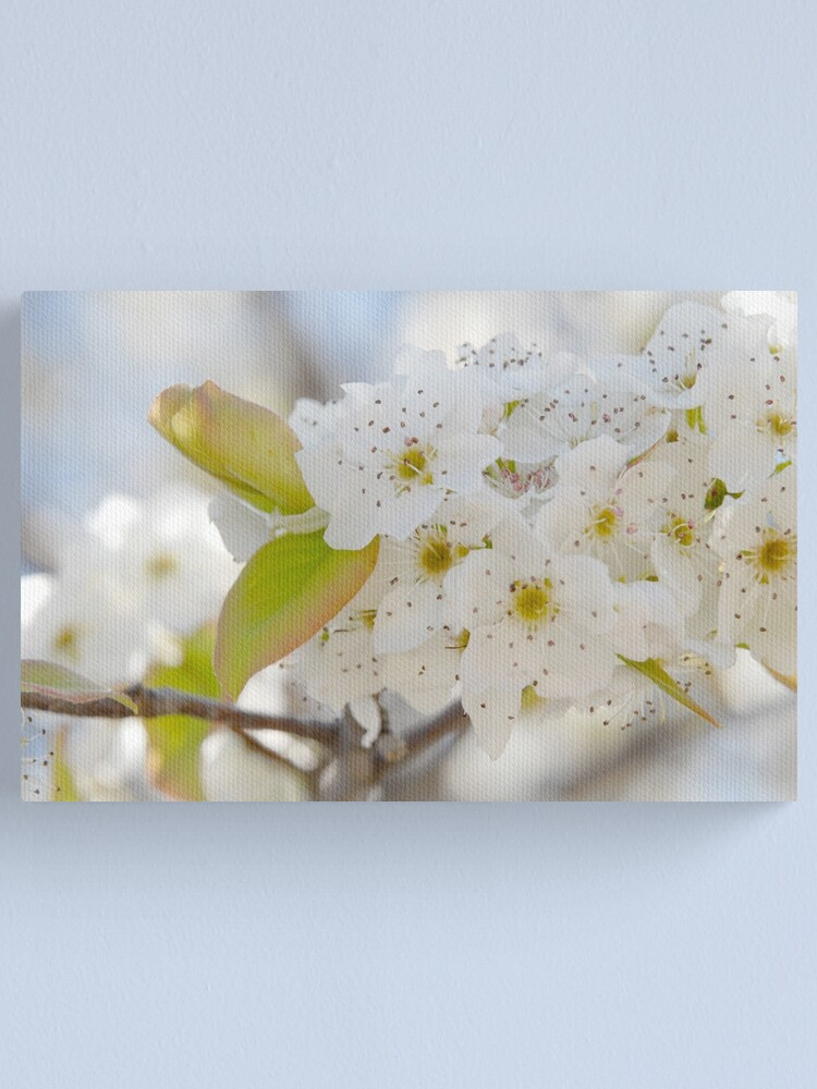 Alternate view of Spring Blooms Canvas Print