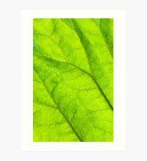 Green leaf macro Art Print