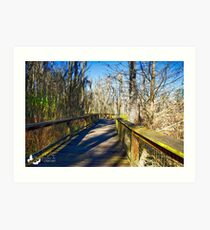 One of the pathways thru the swamps at Magnolia Plantation. Art Print