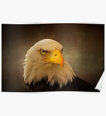 Eagle Portrait Poster