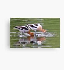 American Avocet Water Bird Metal Print