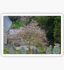 Soft Magnolia blooms compliment the Gravestones... Sticker