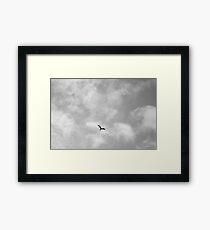 Flying bird Framed Print
