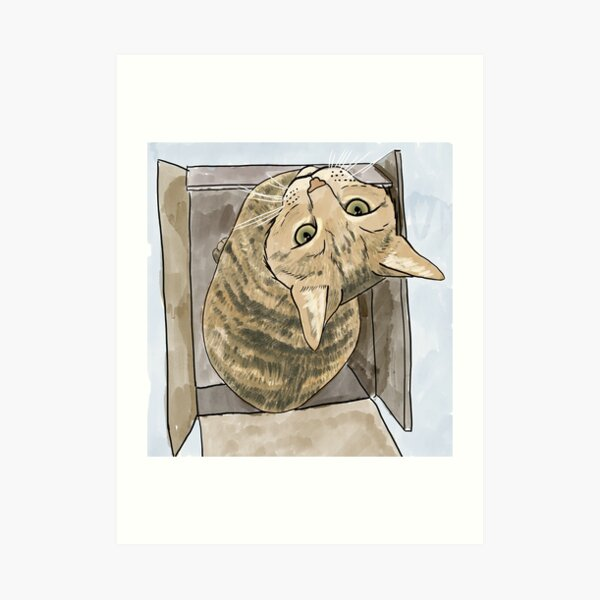 Tabby Cat In A Box (Lucy) Art Print