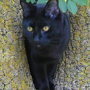 Black Cat In A Tree by JennyB