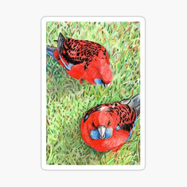 Crimson Rosellas Sticker